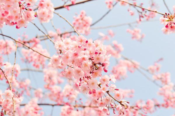 Organizzare un viaggio in Giappone, cosa sapere